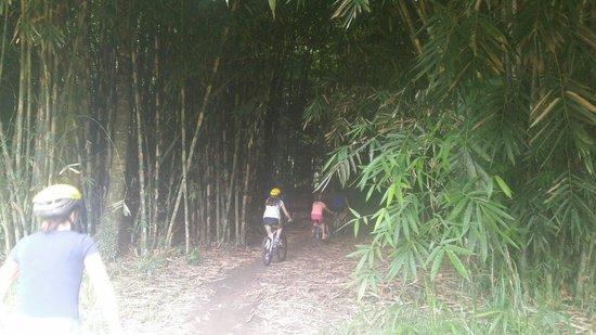 Bali Island Adventure Tour : Bike tour entering the bamboo forrest