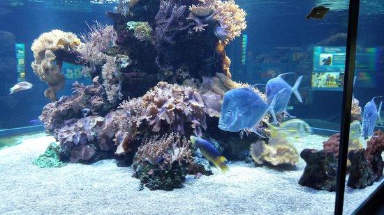 Haus der Natur: the aquarium (part of)