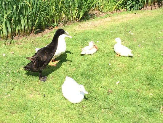 Millbrook Cottages: Loved feeding the ducks