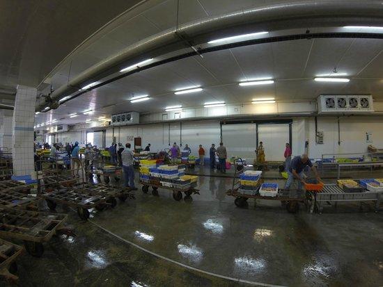 Haliotika - La Cité de la Pêche : La criée du soir