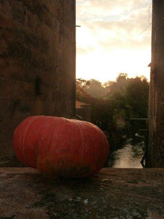 Les Meres Cocottes : La dême à l'automne