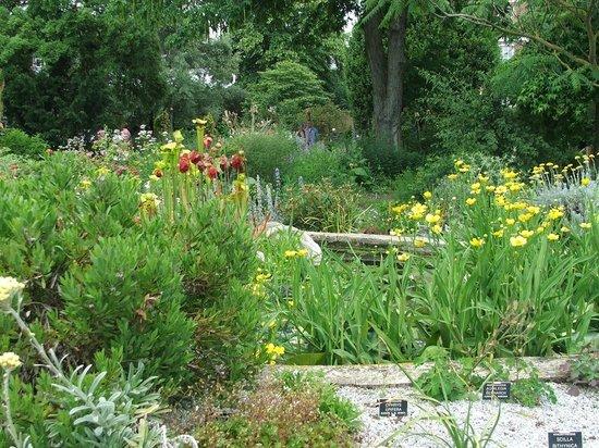 Chelsea Physic Garden: piante officinali