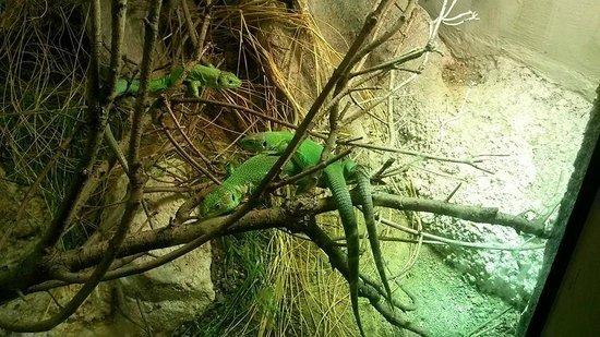 Parc Zoologique de Paris: Lezard