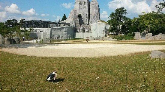 Parc Zoologique de Paris: Oiseau