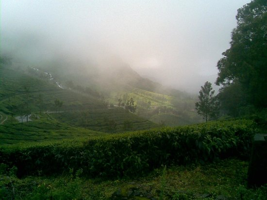 Tea Valley Resort: way to munnar
