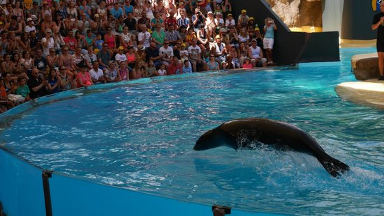 Loro Parque: Sea Lion