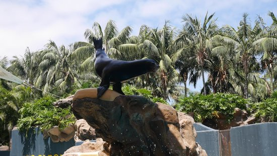 Loro Parque: Sea Lion show was amazing