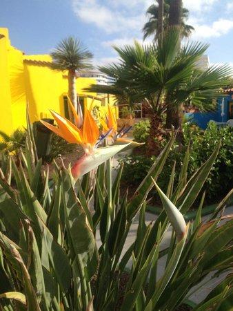 Tropical La Zona: Beautiful setting