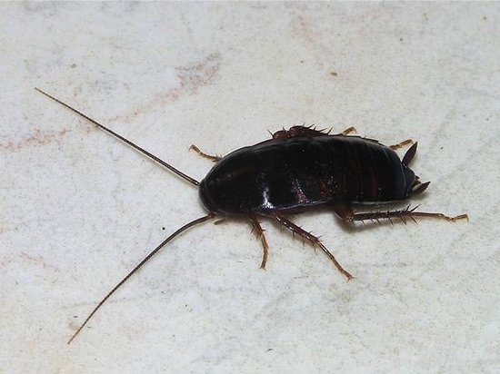 The St. Regis Houston: What the roach in the bathroom looked like