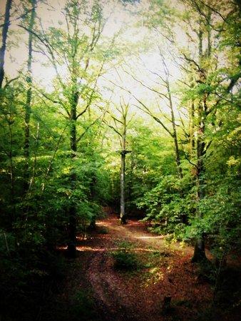 Les Cabanes du Bois Landry : chemin de tyrolienne