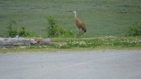Beluga Lake Lodge: A crane at the back of motel