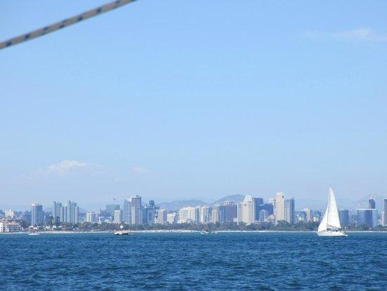 Sail San Diego: San Diego skyline from the sailboat