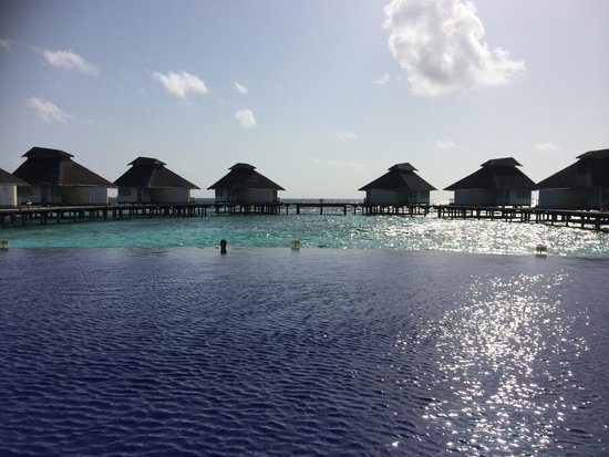 Ellaidhoo Maldives by Cinnamon : Husband all alone in the amazing pool!!