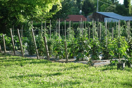 Hotel Villa Franceschi : herb garden