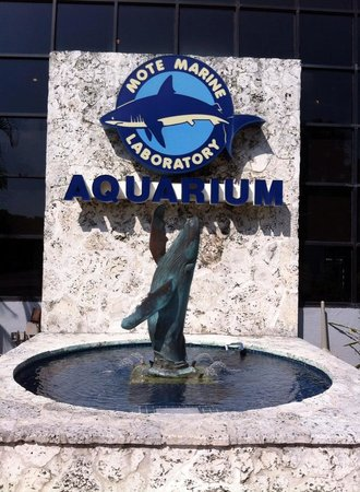 Mote Marine Laboratory and Aquarium : Mote Marine Aquarium
