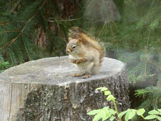 Alpine Village Cabin Resort - Jasper: entertaining resident!