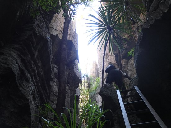 Tsingy de Bemaraha Strict Nature Reserve: tsingy 2