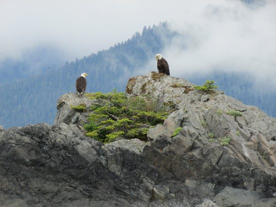 Sitka Sound Ocean Adventures: Eagles everywhere!