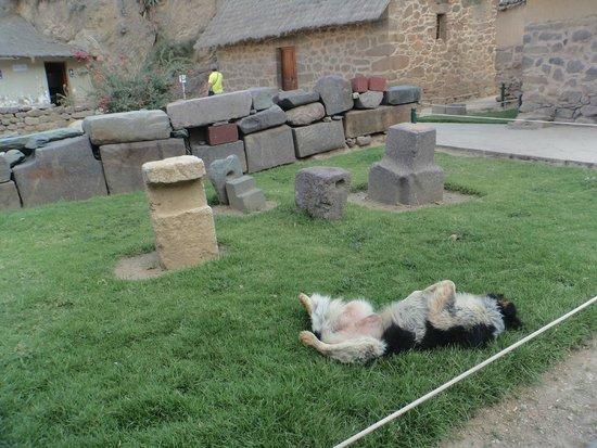 Archaeological Park Ollantaytambo: Cansei!