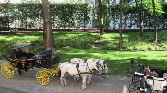 The Guesthouse Vienna: Gentle white horses and carriages are the symbol of the hotel.
