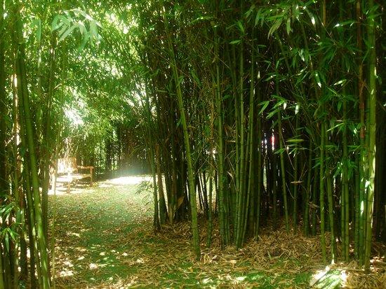 Hotel Spa Relais & Chateaux A Quinta da Auga: bosque de bambu del jardin