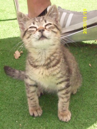 B&B Il Pettirosso : gattino