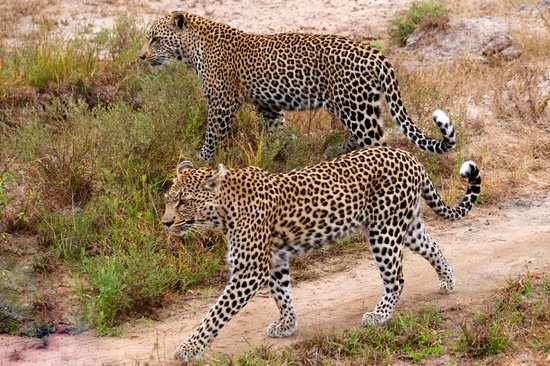 Simbavati River Lodge: Mother and child