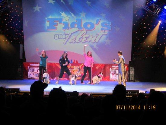 Clay Cooper Theatre: Stunt Dog