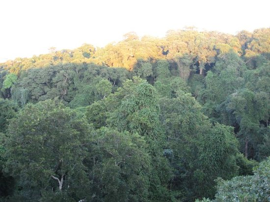 Dlinza Forest: Forest Canopy