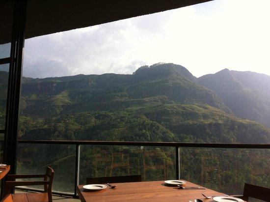 Tea Bush Hotel : Вид из столовой