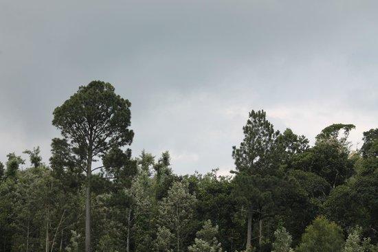 N.P.S Lake View Resort: Gloomy day view from resort