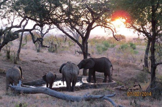 Tarangire Treetops : Elephants at Tarangire Tree Tops Pool
