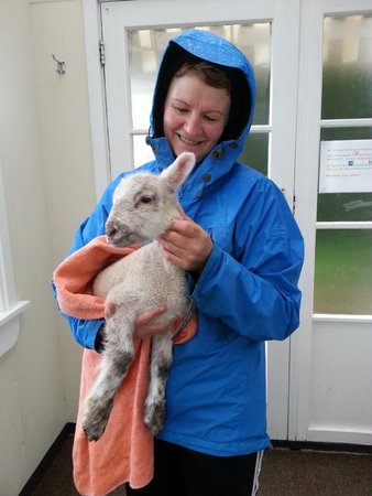 Lorneville Lodge and Holiday Park: Karen & the lamb