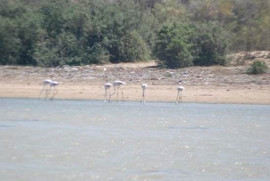 Ranch de Diabat : Flamingos