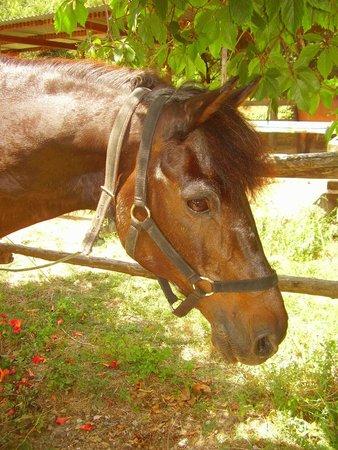 Trailriders Horse Trekking : Рейбл