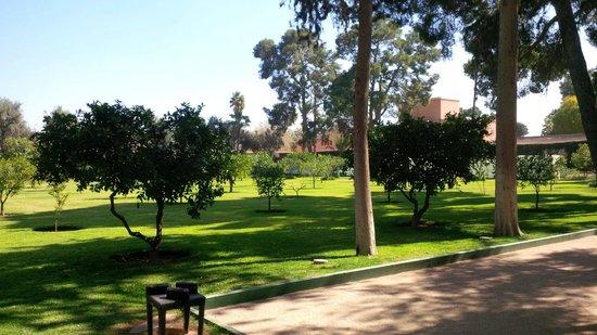 La Mamounia Marrakech : Les jardins de La Mamounia