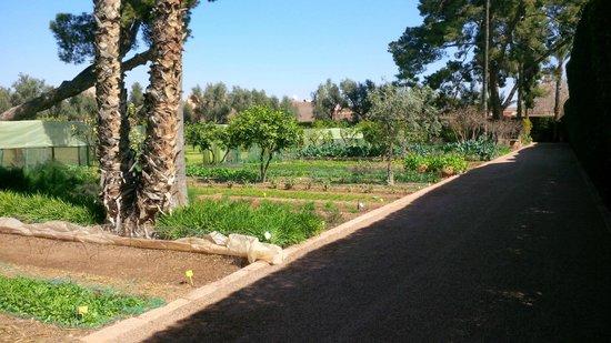 La Mamounia Marrakech : Le potager de La Mamounia