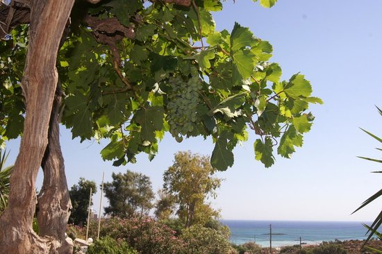 Taverna Kalomirakis Family : View from the restaurant