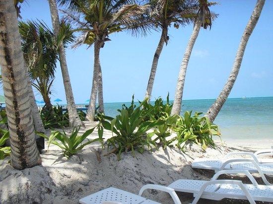 Decameron Marazul: Praia do Hotel