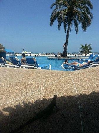 SUNSOL Punta Blanca: Pile