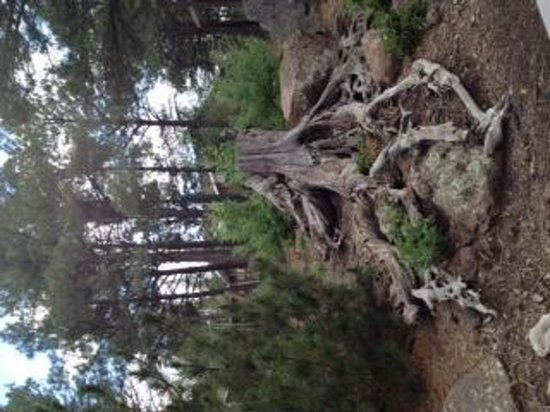 Little America Hotel Flagstaff: beautiful tree stump on grounds