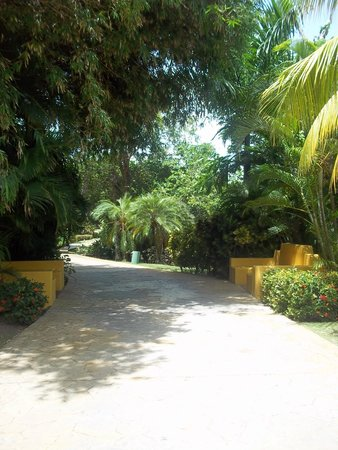Caribe Club Princess Beach Resort & Spa: walk way