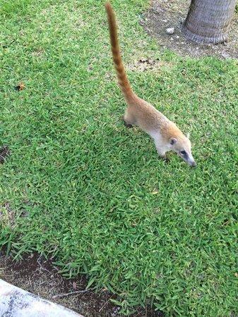 ClubHotel Riu Tequila: Little animals that run around