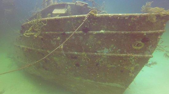Stuart Cove's Dive Bahamas: Sea Viking Wreck