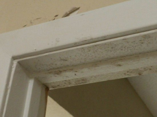 Red Roof Inn Gulf Shores : Peeling paint and mold.