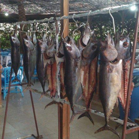 Pyramisa Sahl Hasheesh Resort : тунец на ужин на гриле