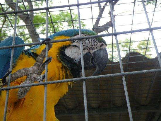 Madeira Botanical Garden : voliere perroquet