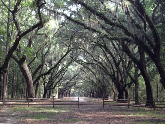 Wormsloe Historic Site : Loved the oak trees and Spanish moss!