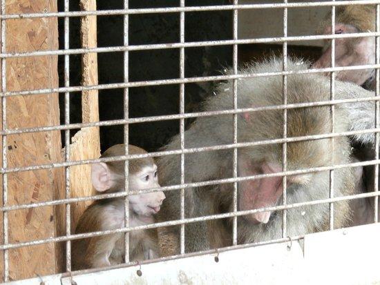 Village Naturéo : monos