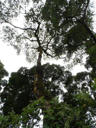 Galapagos Experience: camino a los gemelos